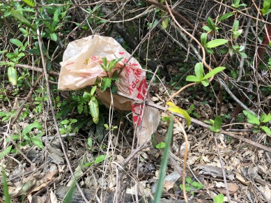 This is a good enough reason to avoid single use grocery bags