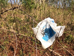 Thickets are often the final resting spot for plastic bags